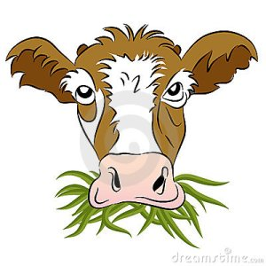 grass-fed-cow-22431113