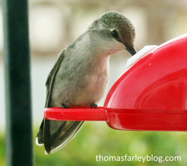 testhummingbird_edited-2